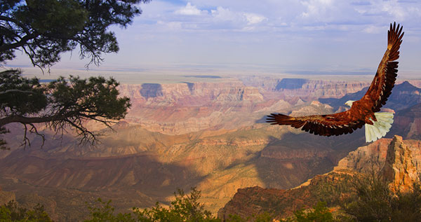 011116-cc-grand-canyon-eagle